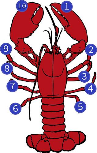 lobster-journey